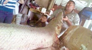 alligator gar pic2