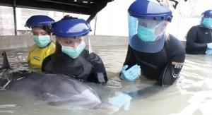 dolphin rescue pic3