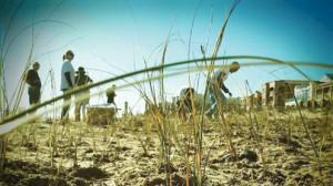 dune restoration pic1