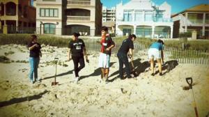 dune restoration pic2