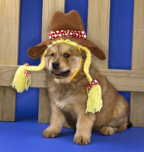 Puppy in cowgirl outfit