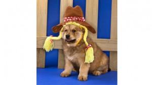 Ditter Dog2