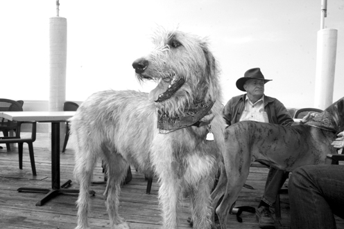 Ditter Dog pic6