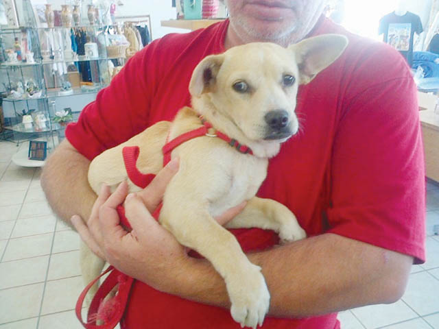 ADOPT-A-FRIEND: Buddy – Port Isabel-South Padre Press