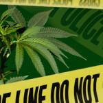 Medical marijuana plant on green background. Dark scene.