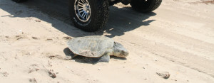 For the love of turtles, please slow down!