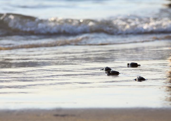 Turtles9
