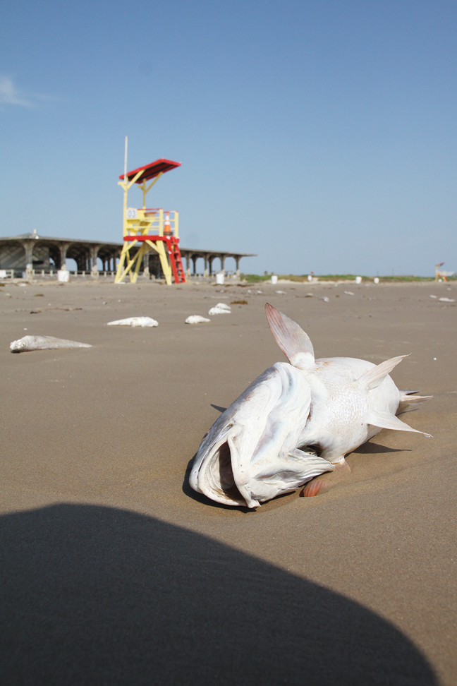 Red tide concerns continue port isabel south padre press for Tides for fishing texas city