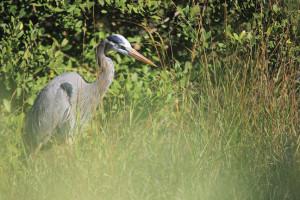 Bird Fest and Nature Quest Saturday