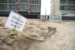 Dune Daze: SPI condo tenants restoring dunes on their own
